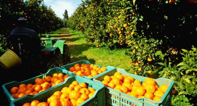 DN en defensa de nuestra agricultura<br><span style='color:#006EAF;font-size:12px;'>PEDIMOS MEDIDAS EFECTIVAS PARA NUESTRO CAMPO</span>
