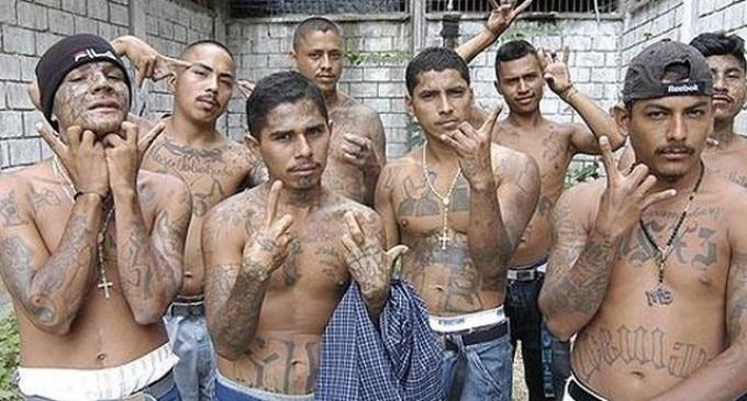 Los «hijos de la inmigración» nutren las 88 bandas latinas fichadas en España<br><span style='color:#006EAF;font-size:12px;'>DELINCUENCIA EXTRANJERA EN ESPAÑA</span>